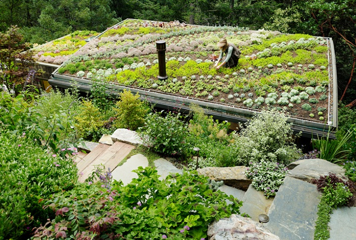 green roof feldman architecture