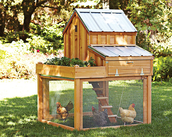 How to Change Chicken Ordinances   Homesteading and Livestock    Tiny Houses  Tiny Homes  Tiny House Plans  Small House Plans  Micro Home