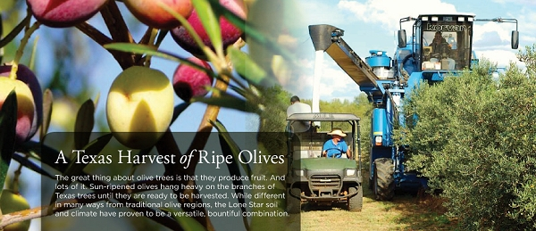 Texas Olive Council