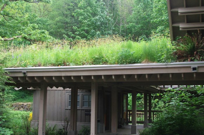 Green roofs, grass roofs, roofs with grass, roofs with plants, green roofing membranes